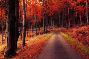 Autumn Journey XXIX. by realityDream