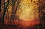 Autumn Walk LXV.