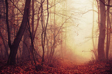 Fading Autumn IV. by realityDream