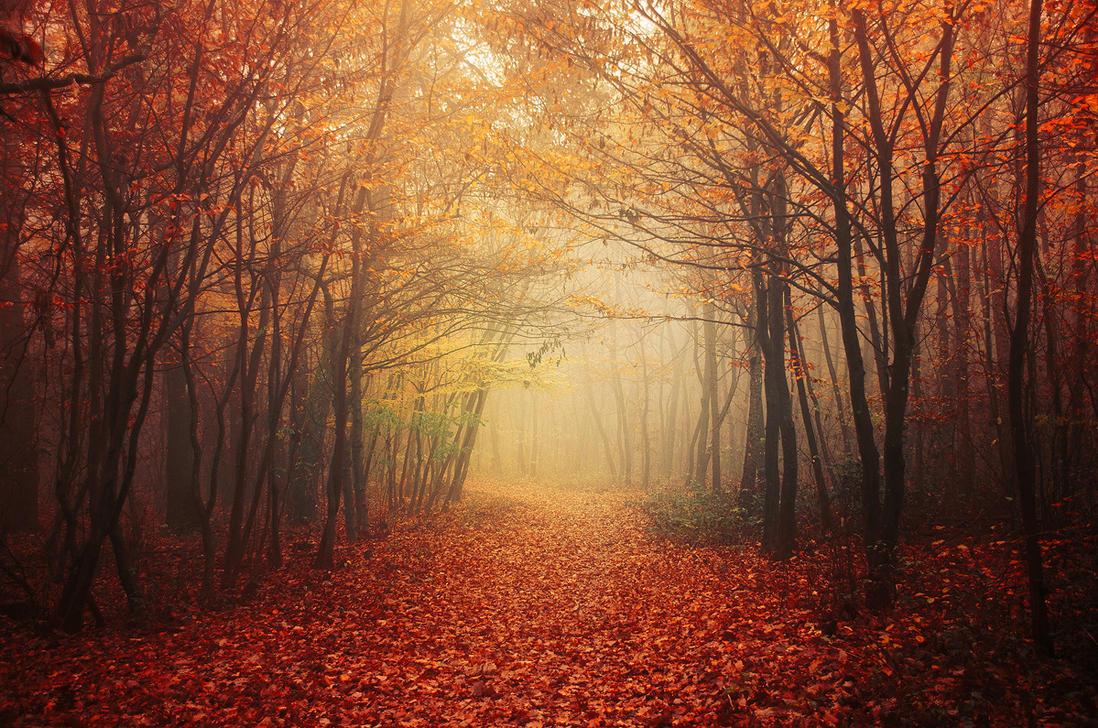 Autumn Walk LI. by realityDream