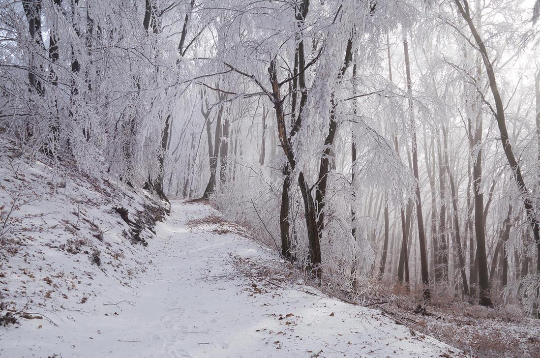 Winter Wonderland V. by realityDream