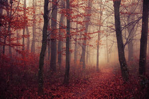 Fading Autumn V. by realityDream