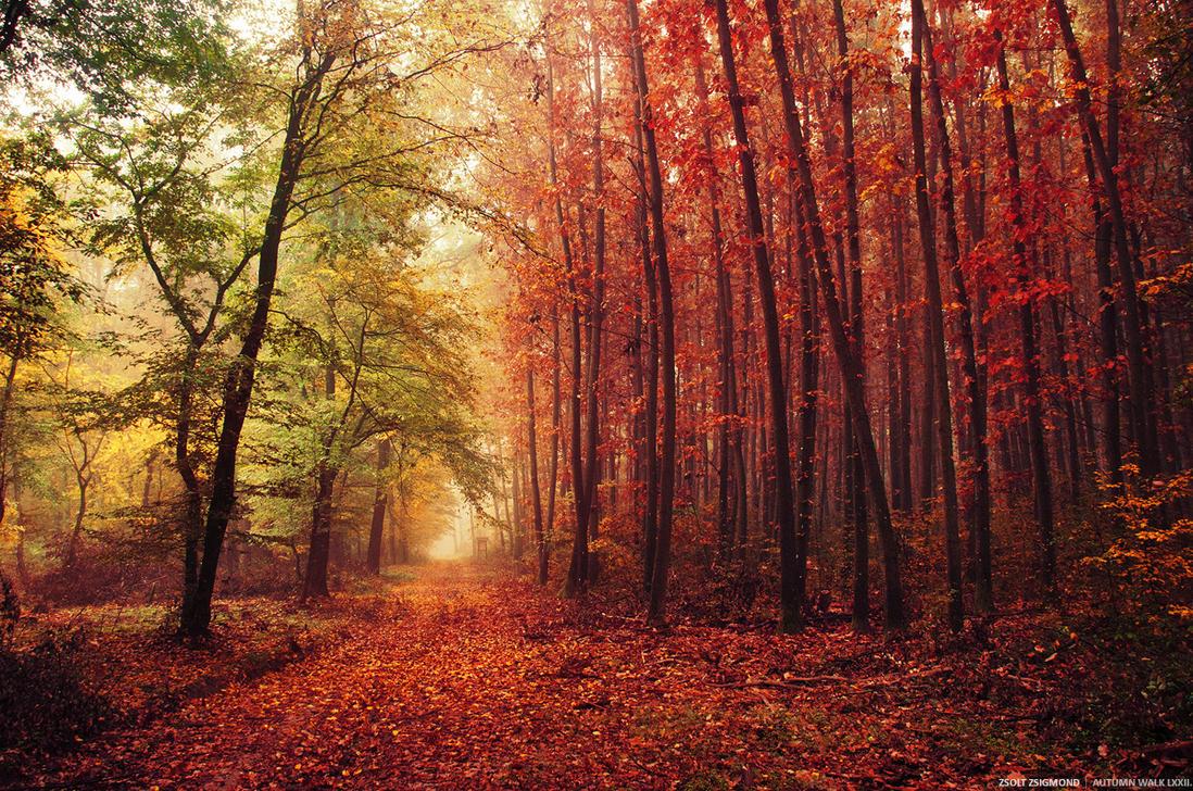 Autumn Walk LXXII. by realityDream