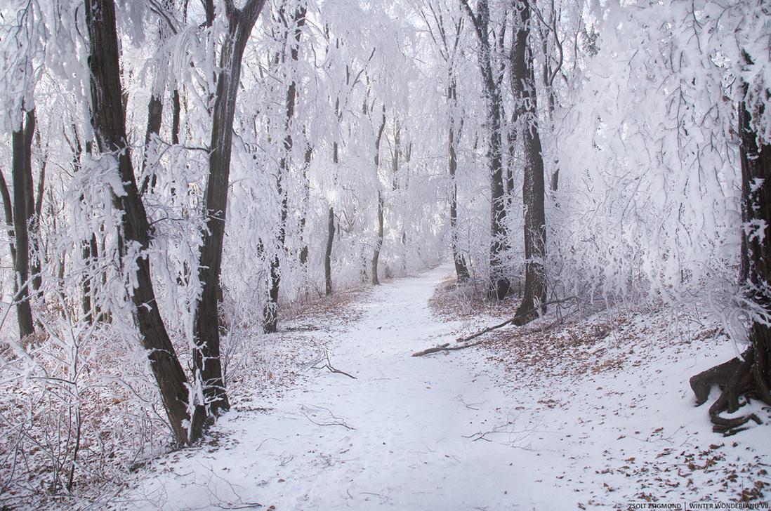 Winter Wonderland VII. by realityDream