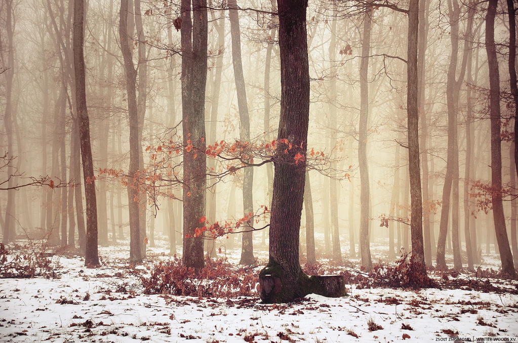Winter Woods XV. by realityDream