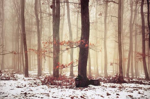 Winter Woods XV.