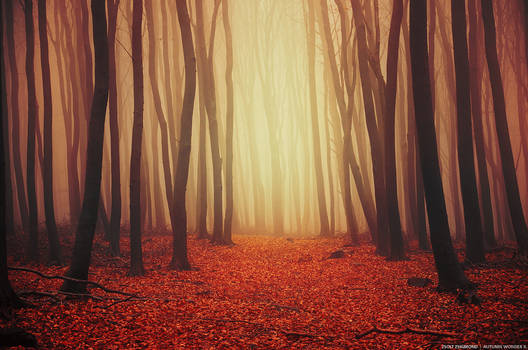 Autumn Wonder II.