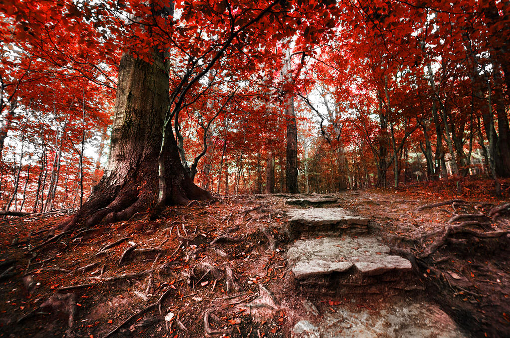 Red Forest VII. by realityDream