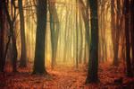 Fading Autumn II.