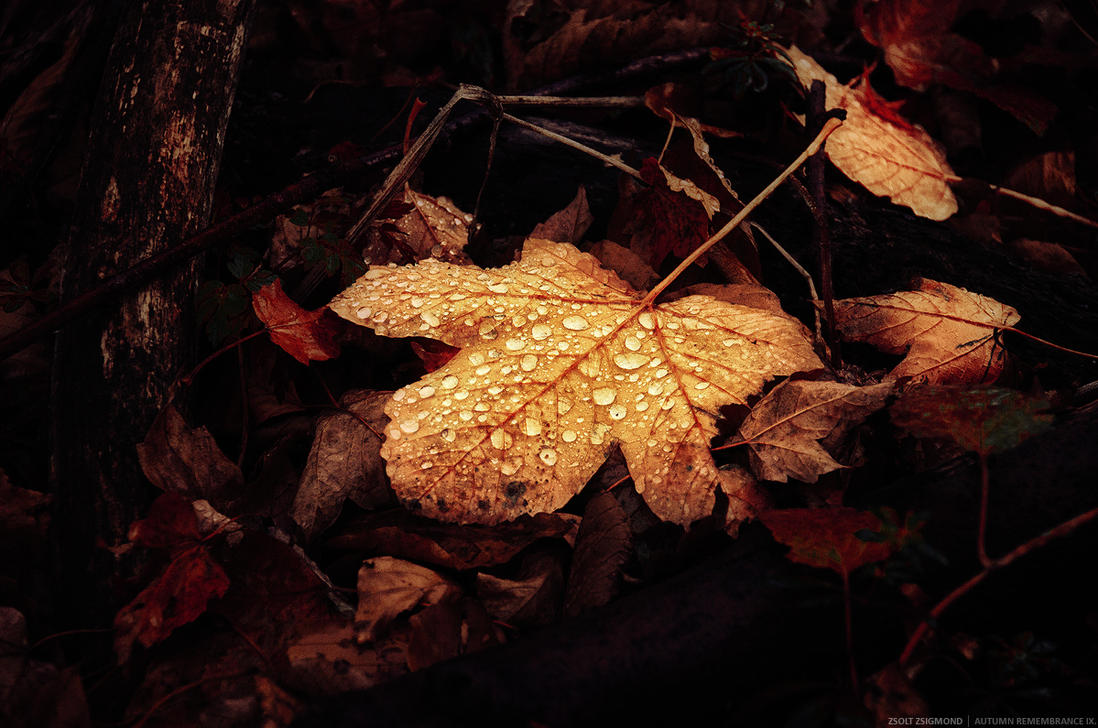 Autumn Remembrance IX. by realityDream
