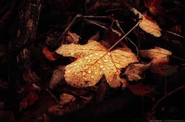 Autumn Remembrance IX.