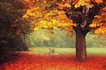 Fall Impressions V.