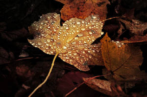 Autumn Remembrance VIII. by realityDream