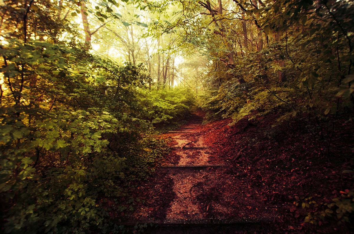 Early Autumn II. by realityDream
