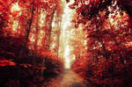 Red Forest VIII.