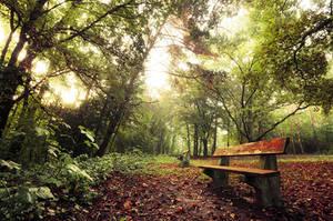 Early Autumn III. by realityDream