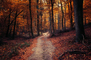 Autumn Walk LXXIV. by realityDream