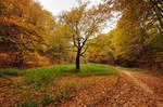 Autumnscape IV.