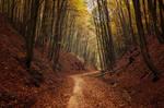 Autumn Walk LXXV.