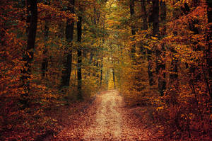 Autumn Walk LXXVI. by realityDream