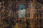Autumn Window I.