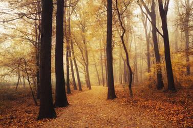 Autumn Walk LXXXIII. by realityDream