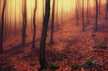Autumn Wonder IV. by realityDream