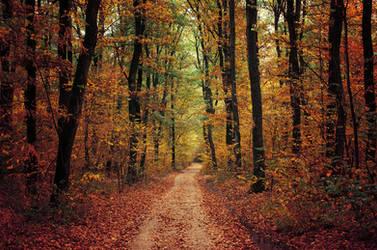 Autumn Walk LXXVII. by realityDream