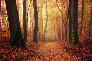 Autumn Walk LXXXVI. by realityDream