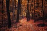 Autumn Walk LXXXI.