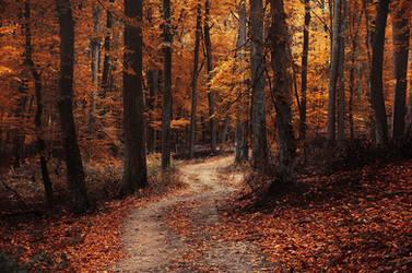 Autumn Walk LXXXIX. by realityDream