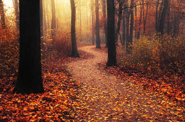 Autumn Walk LXXXVII. by realityDream
