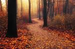 Autumn Walk LXXXVII.