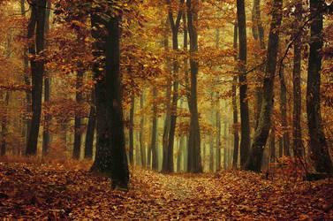 Autumn Walk XCII. by realityDream