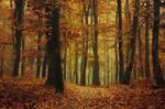 Autumn Walk XCII.