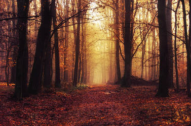 Fading Autumn XIII. by realityDream