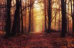 Fading Autumn XIII.