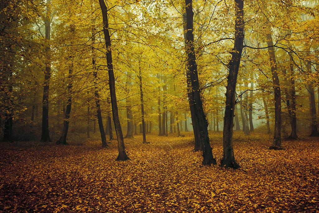 Autumn Walk XCV. by realityDream