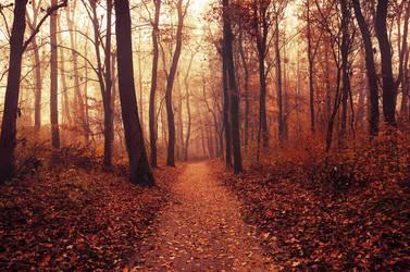 Autumn Walk LXXXV. by realityDream
