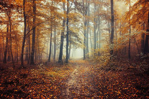 Autumn Walk C. by realityDream