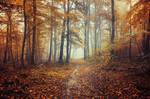 Autumn Walk C.