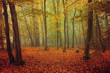 Fall Impressions X. by realityDream