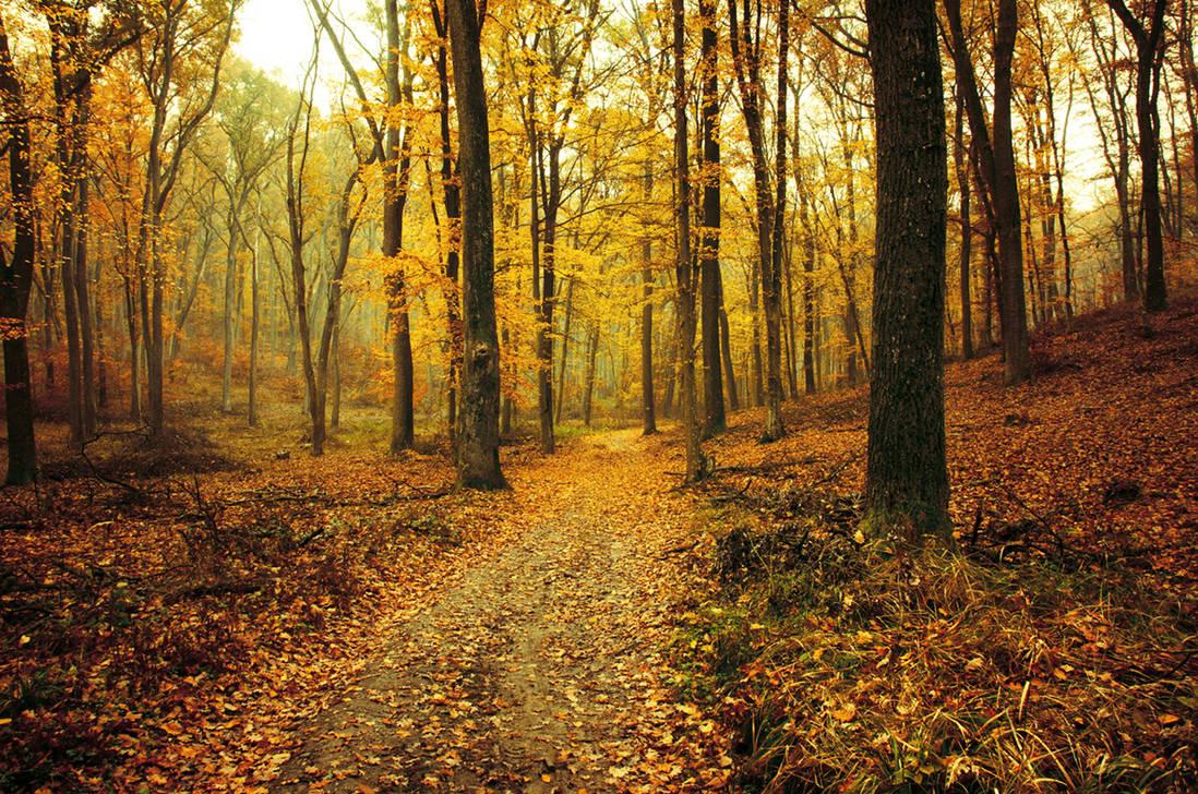 Autumn Walk XCIV. by realityDream