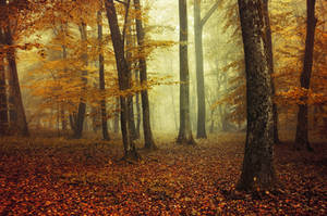 Autumn Walk XCVII. by realityDream