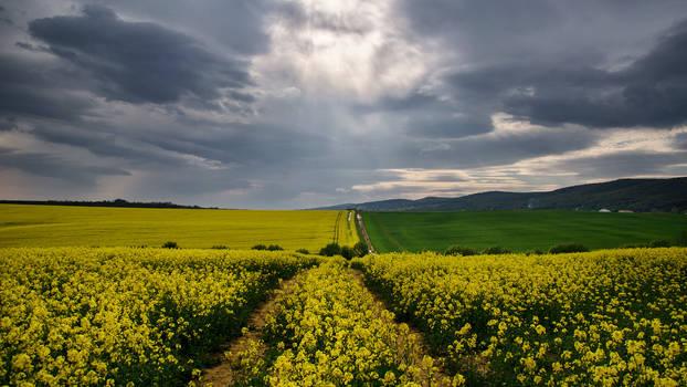 The Luminous Landscape XXXI.
