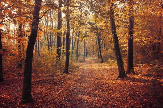 Autumn Walk CII.