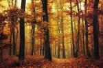 Autumn Walk XCIII.