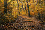 Autumn Walk CV.