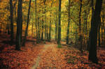 Autumn Walk CXVII.
