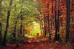 Autumn Walk CXXV.